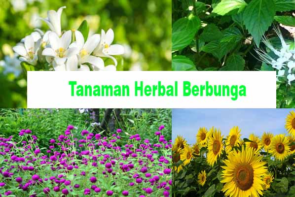 Jenis Herbal Berbunga